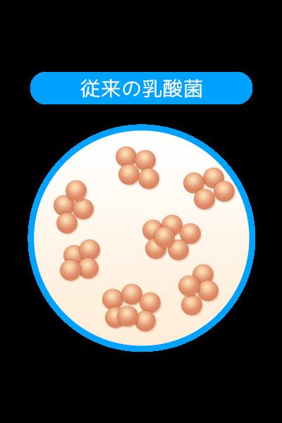 従来の乳酸菌