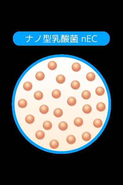 ナノ型乳酸菌nEC